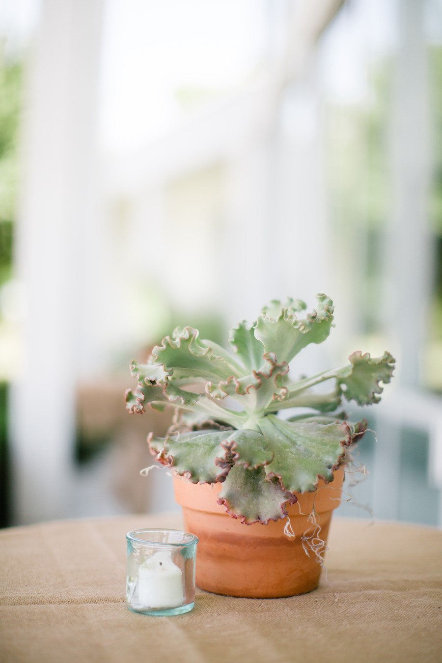 #potted-plants  Photography: Jess Barfield Photography - jessbarfield.com Floral Design: Stems of Dallas - stemsofdallas.com  Read More: http://www.stylemepretty.com/2012/06/11/backyard-little-elm-wedding-by-jess-barfield-photography/