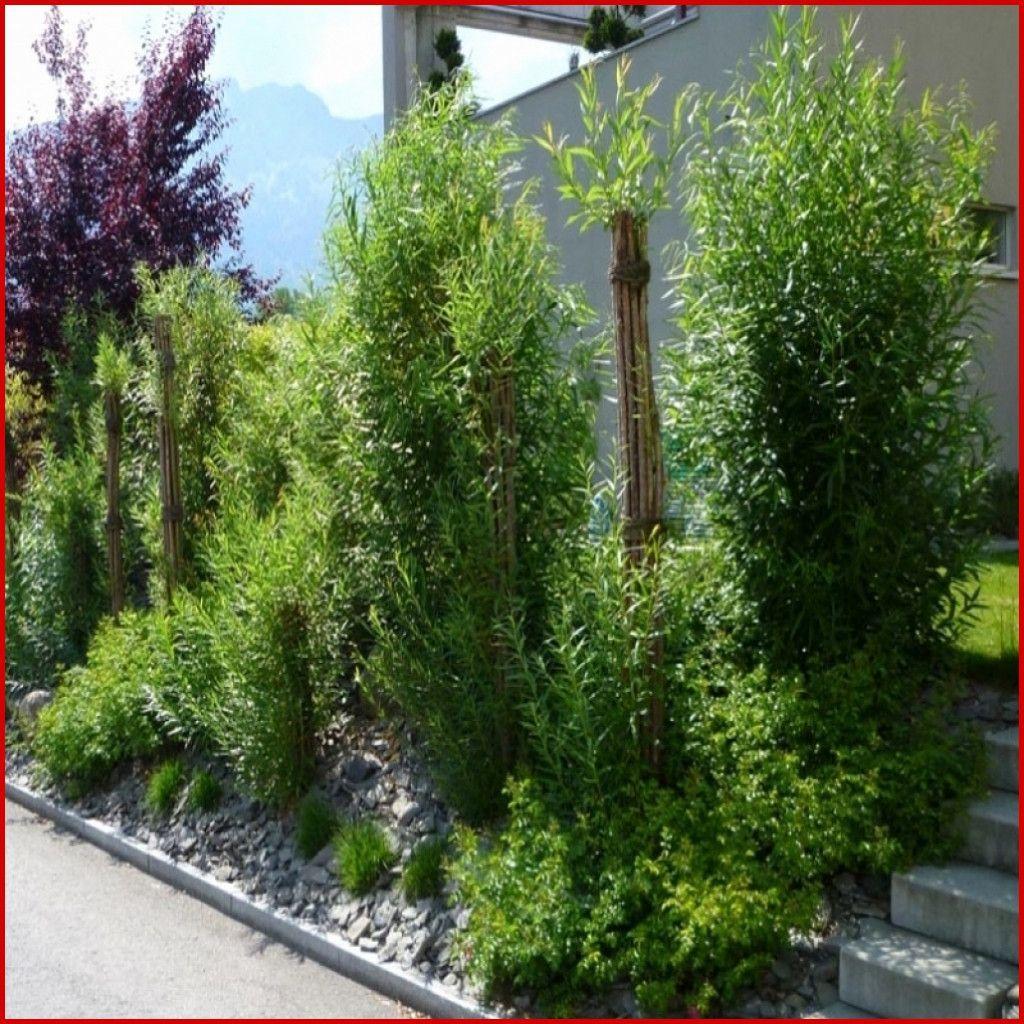 Luxus 43 Fur Pflanzen Sichtschutz Terrasse Sichtschutzpflanzen In