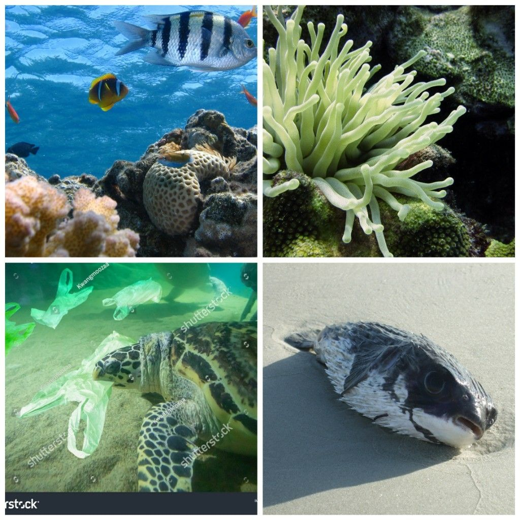 Threat faced by the marine environment into the Asia