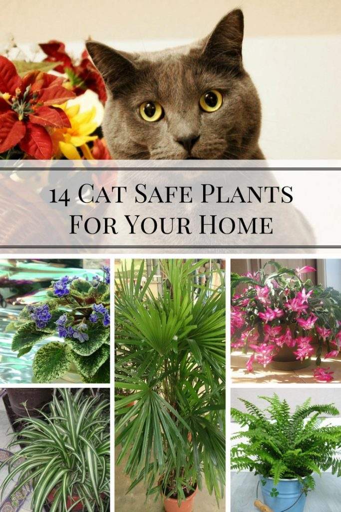 Pin By Susan M Jensen On Plants Pet Friendly In 2020 Cat Safe Plants