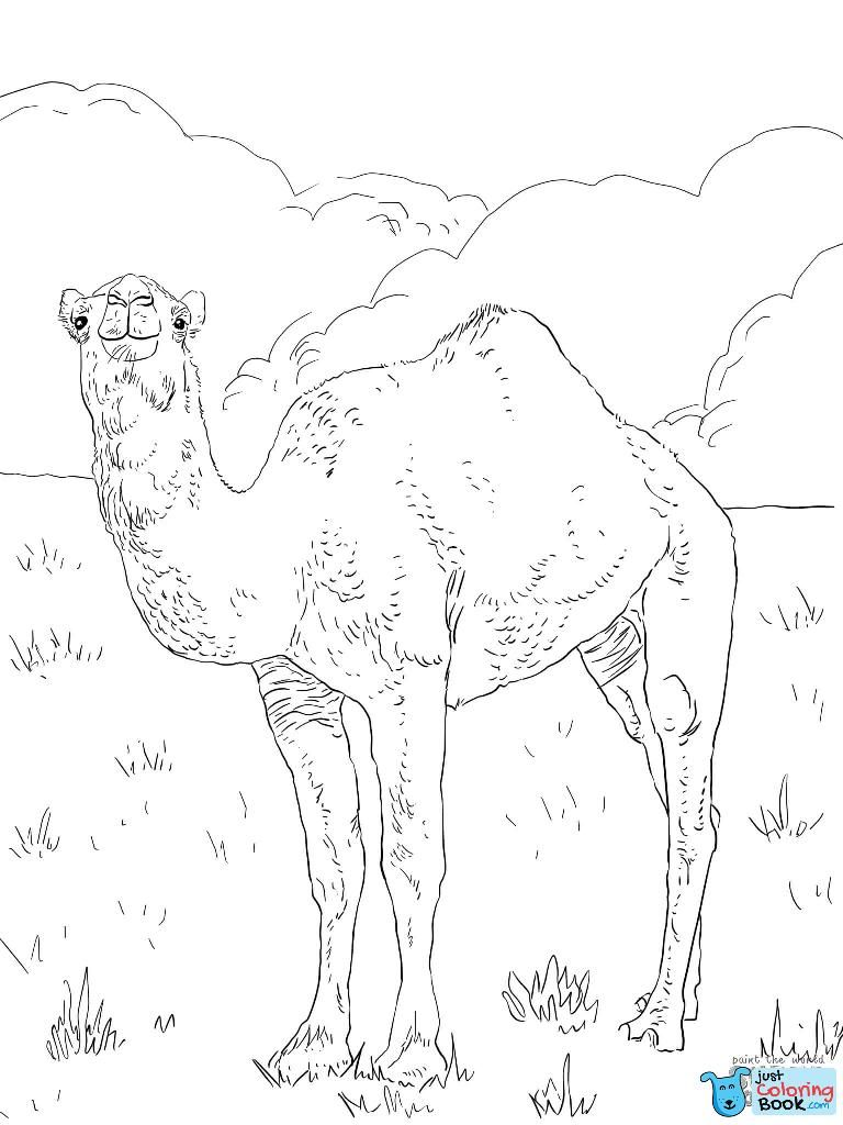 Pin di Camels Coloring Pages