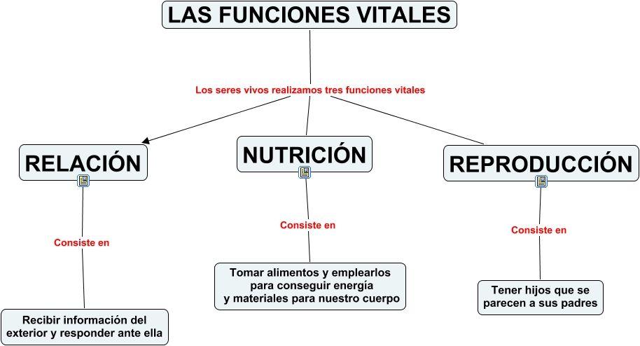 Funciones Vitales Funciones De Nutricion Clasificacion De Seres Vivos Cuaderno Interactivo De Ciencias