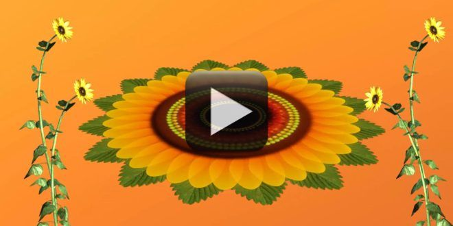 Flowers Animation Video Free Download Free Animated Wallpaper Flowers Free Download Animation Full hd flower animation background