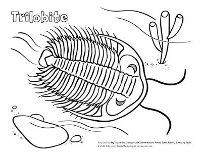 Loreen Leedy Books More Free Trilobite Coloring Page