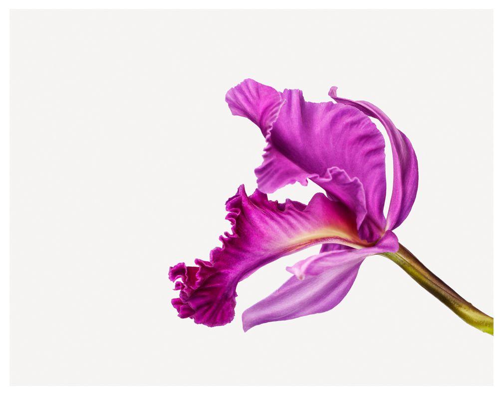 zuckerman | flower | pink | Curiouser & Curiouser | Pinterest