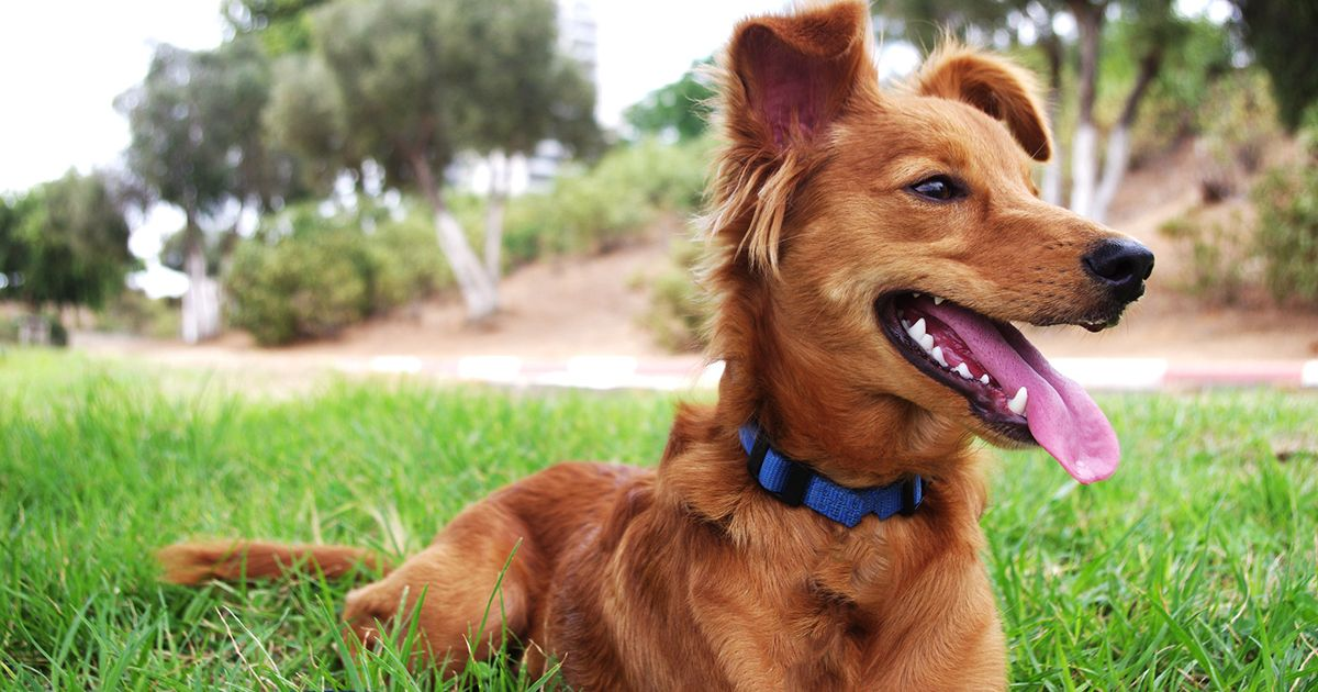 Strutmymutt provides dog owners with free online training