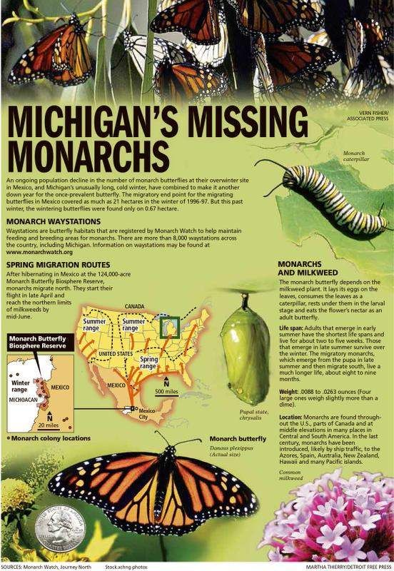 Extreme Winter Takes Toll On Michigan S Monarch Butterflies Monarch Butterfly Facts Monarch Butterfly Garden Butterfly Facts