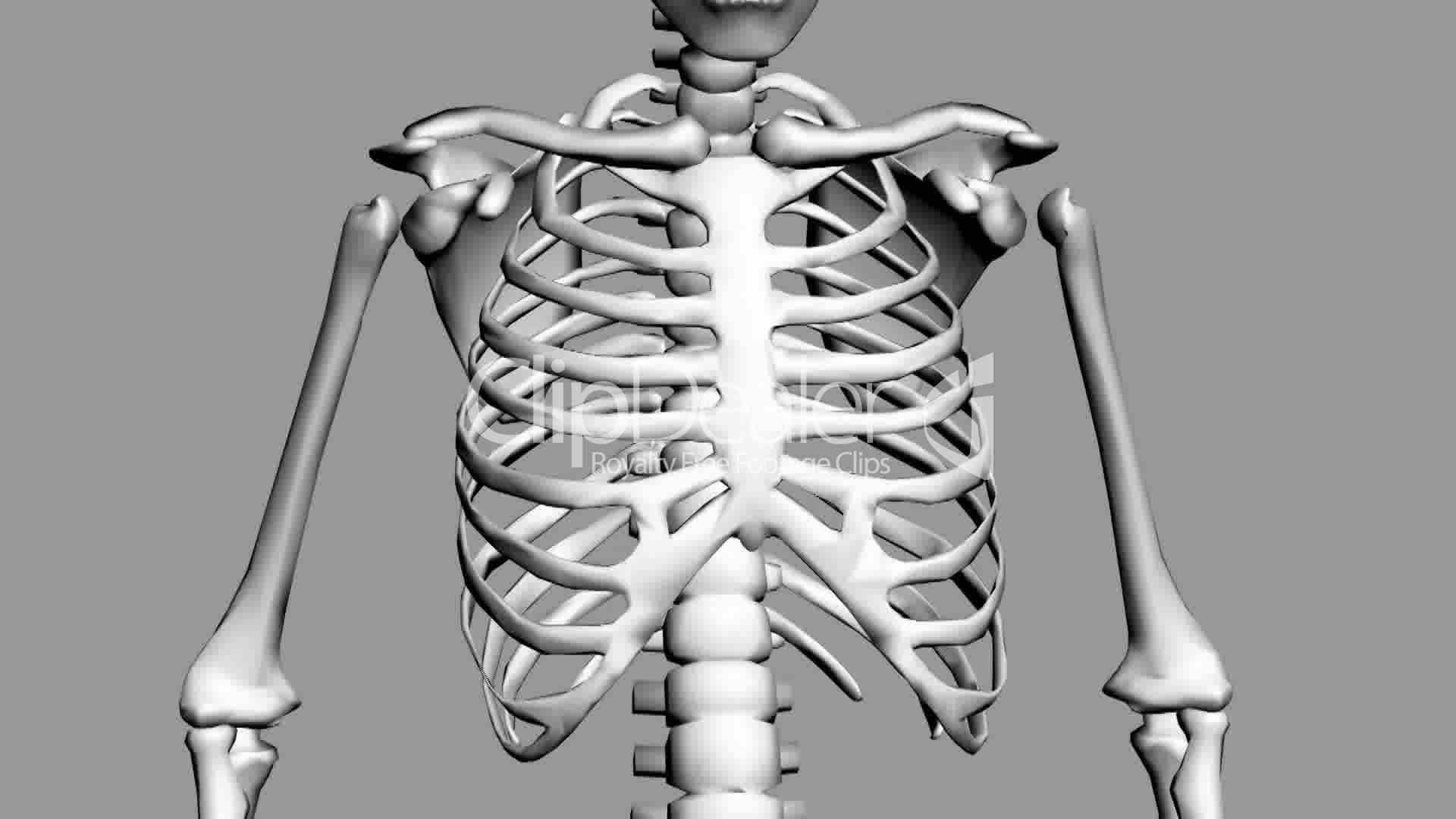 Human Skeleton Chest Bones 784g 19201080 Something Pinterest