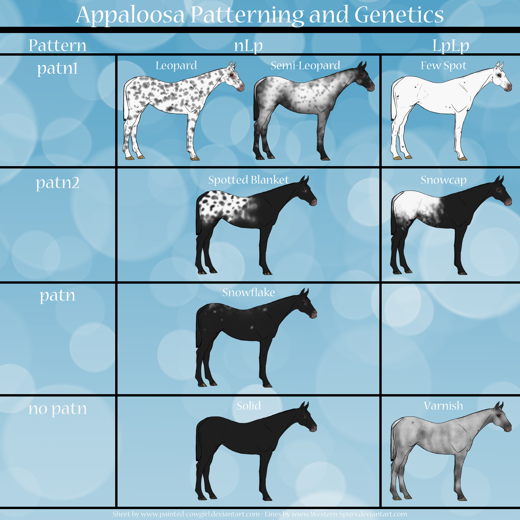 Appaloosa Patterns Genetics Sheet By Painted Cowgirl D8uch41 Png 2000 2000 Custom Horse Horse Anatomy Horse Coloring [ 2000 x 2000 Pixel ]