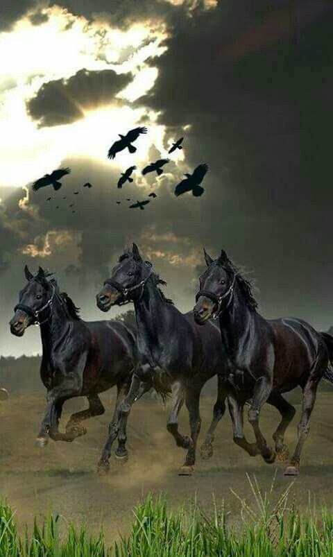 Pin von GwenGwendell Parsons auf Horses Schöne pferde