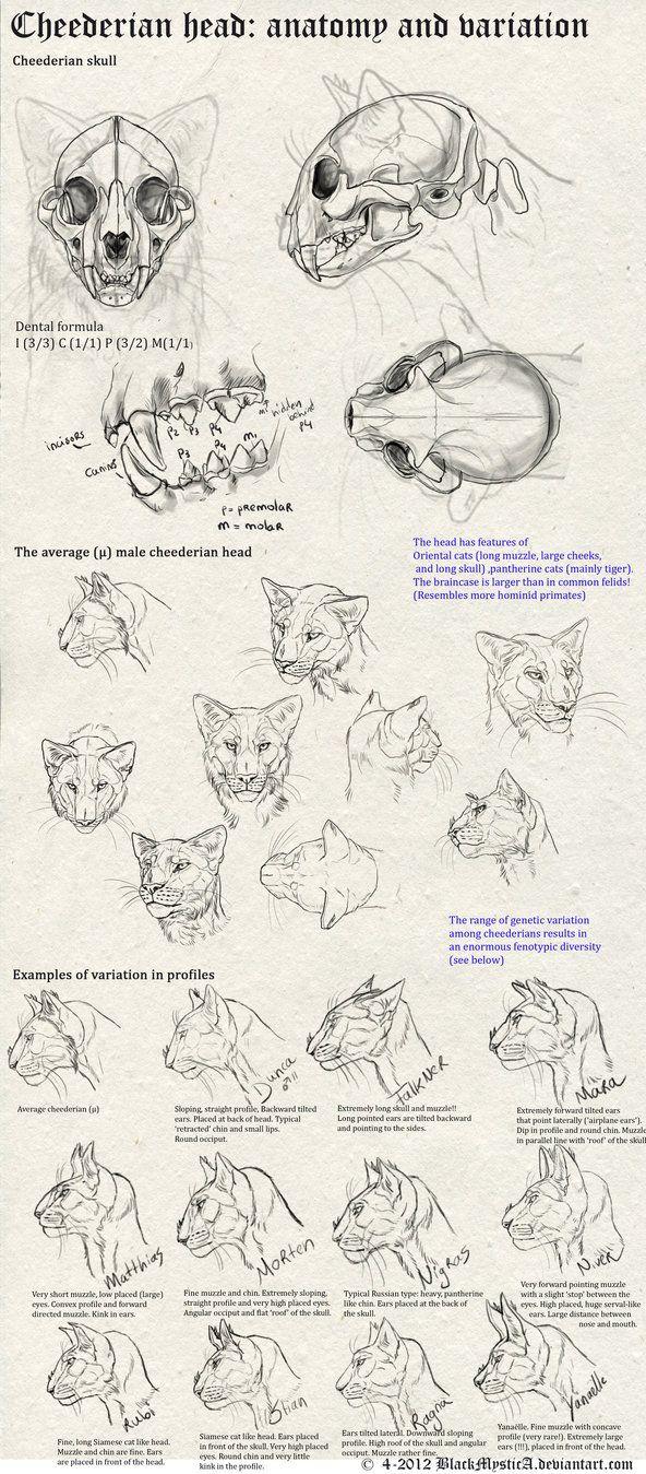 Cheederian head anatomy by BlackMysticA.deviantart.com on ...