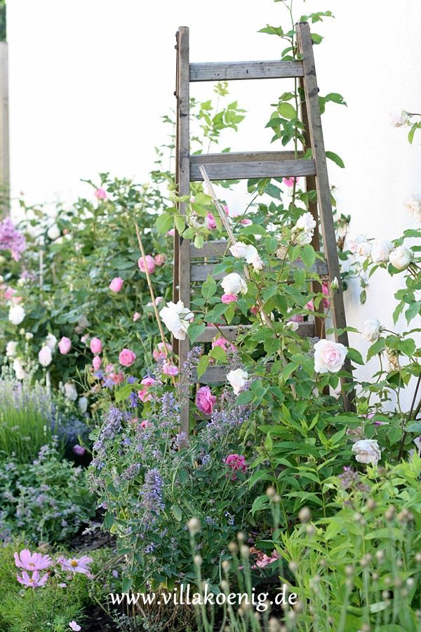 Decorate with Vintage Ladders great way