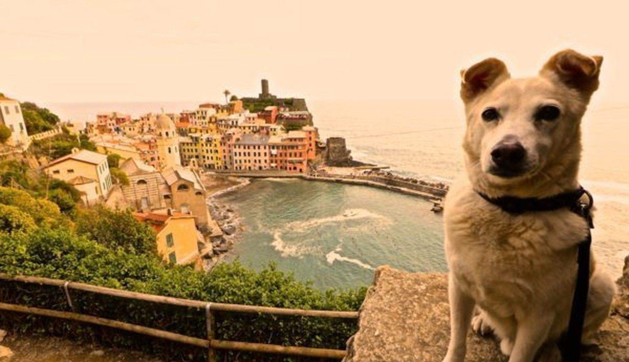Dog Saved From The Streets Travels The World With His New Mom Dogs Pet Travel Dog Travel