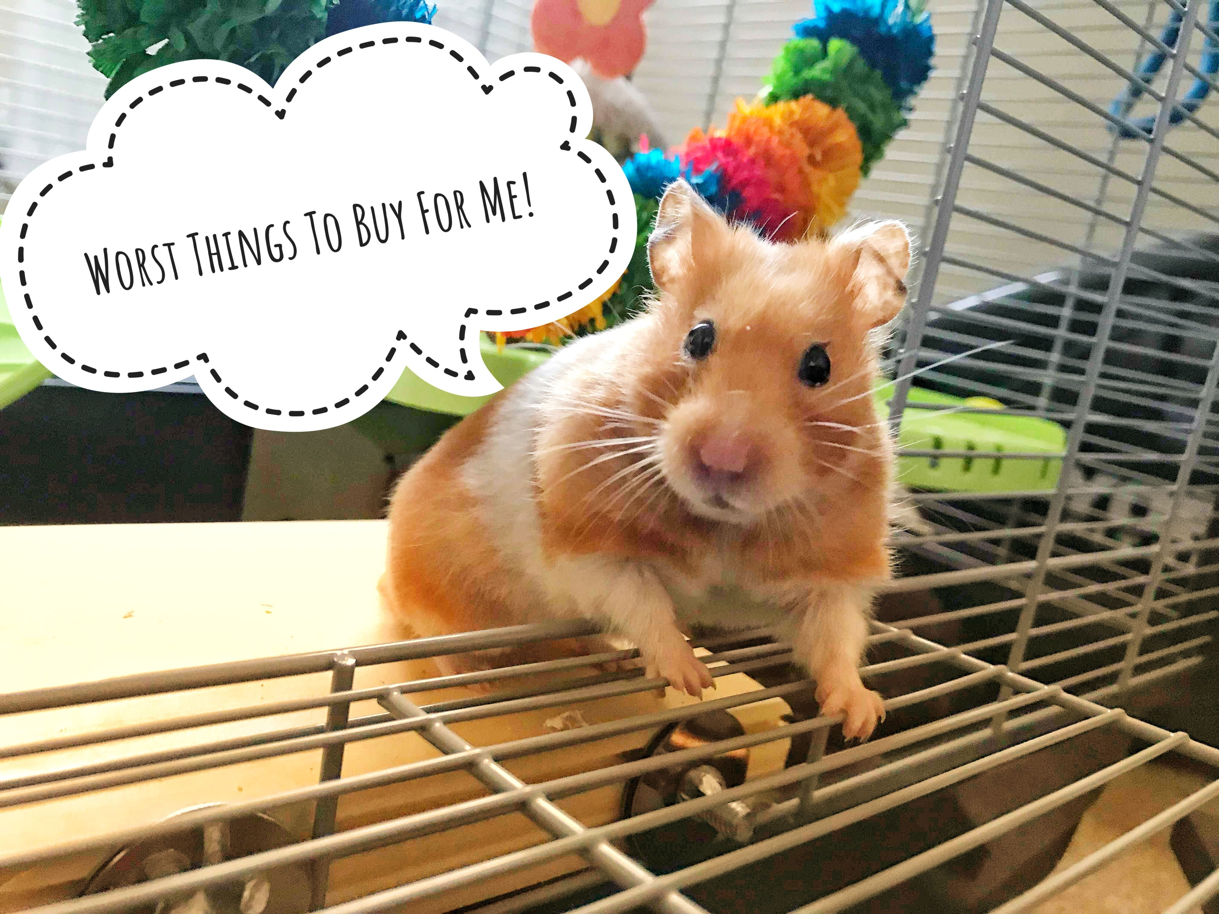 The Worst Things To Buy For Your Hamster! Hamster care