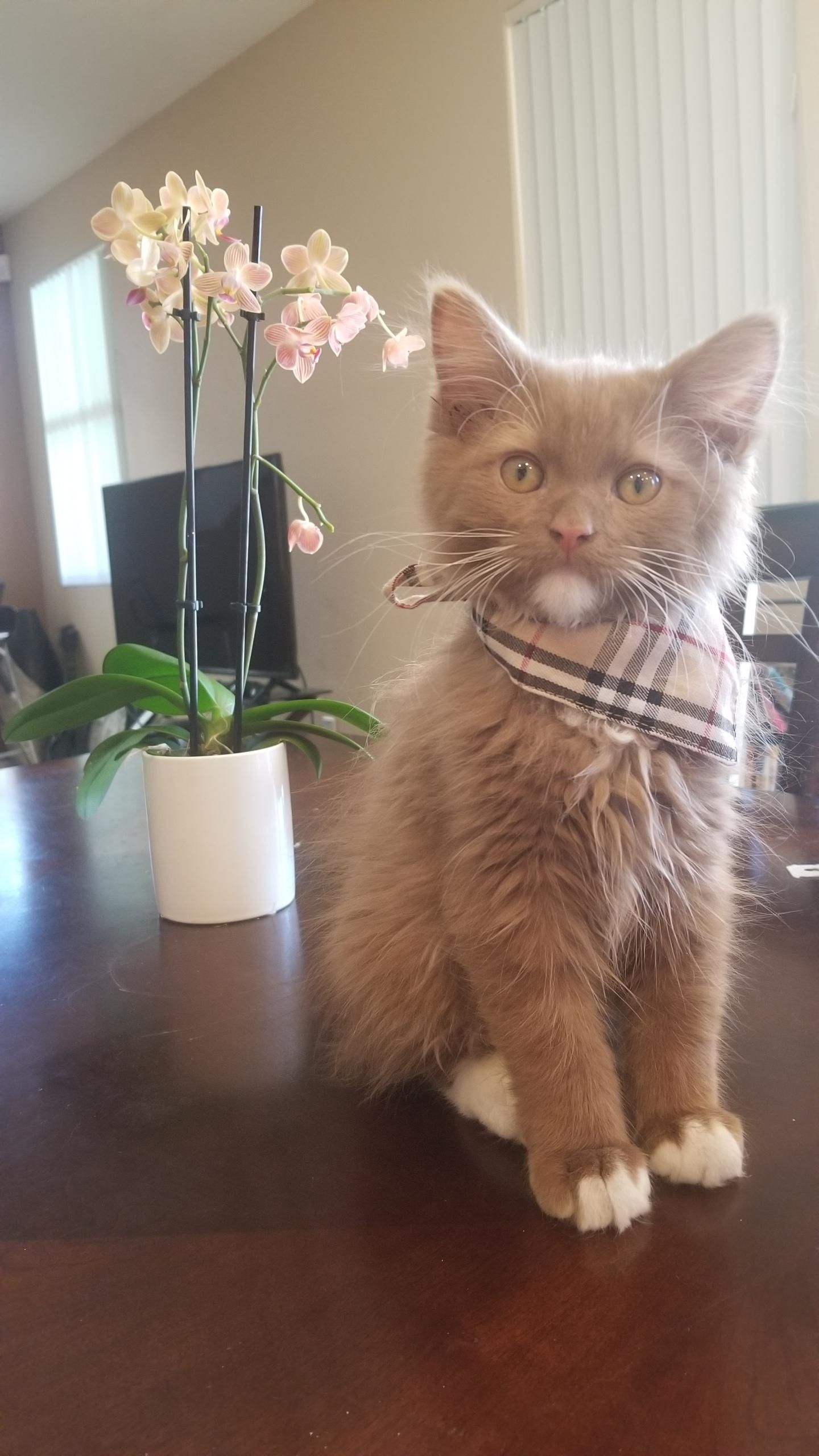 Ender is dressed up for Easter dinner (With images