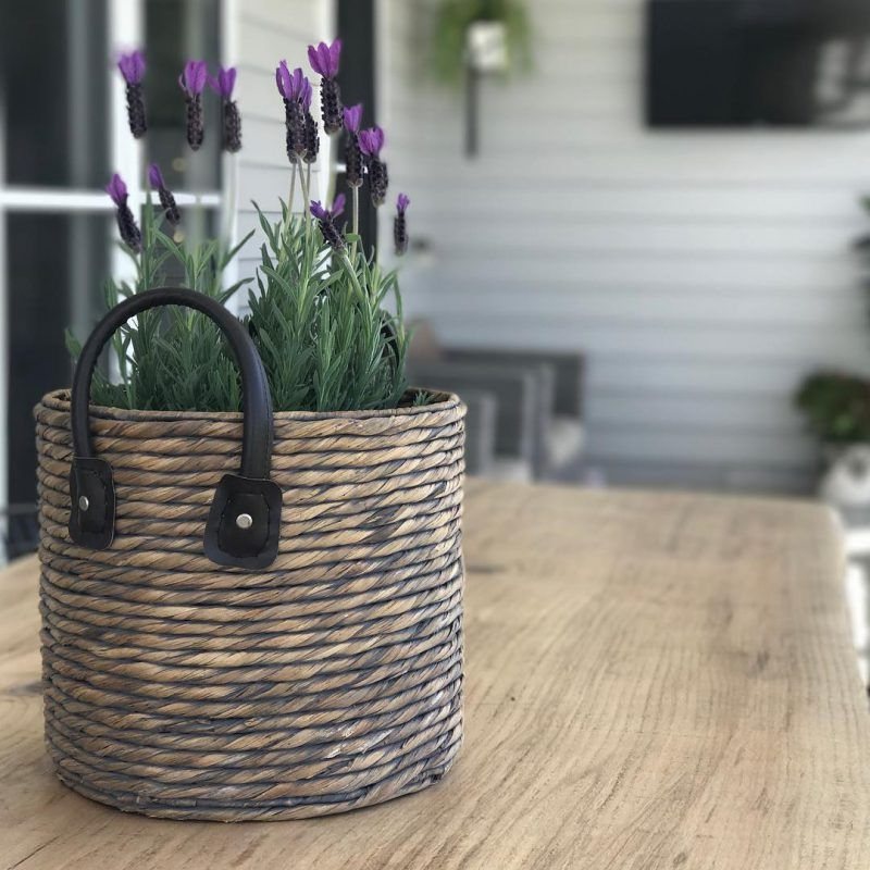 Hardy outdoor potted plants Potted plants outdoor, Small