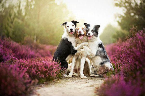 Dogs Love Each Other More Than Humans  20 photos  Morably