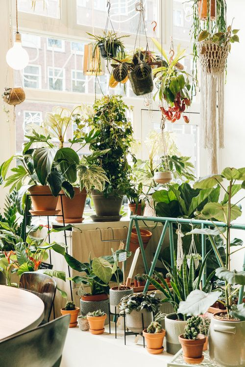 Plant Shopping at Wildernis in Amsterdam (With images