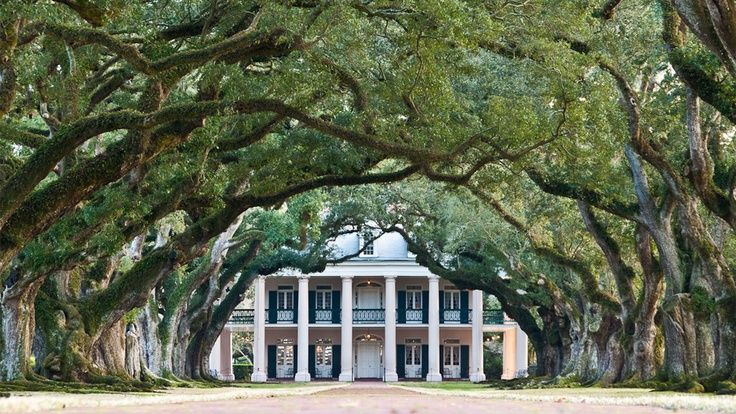 new orlean trees Google Search Plantation homes