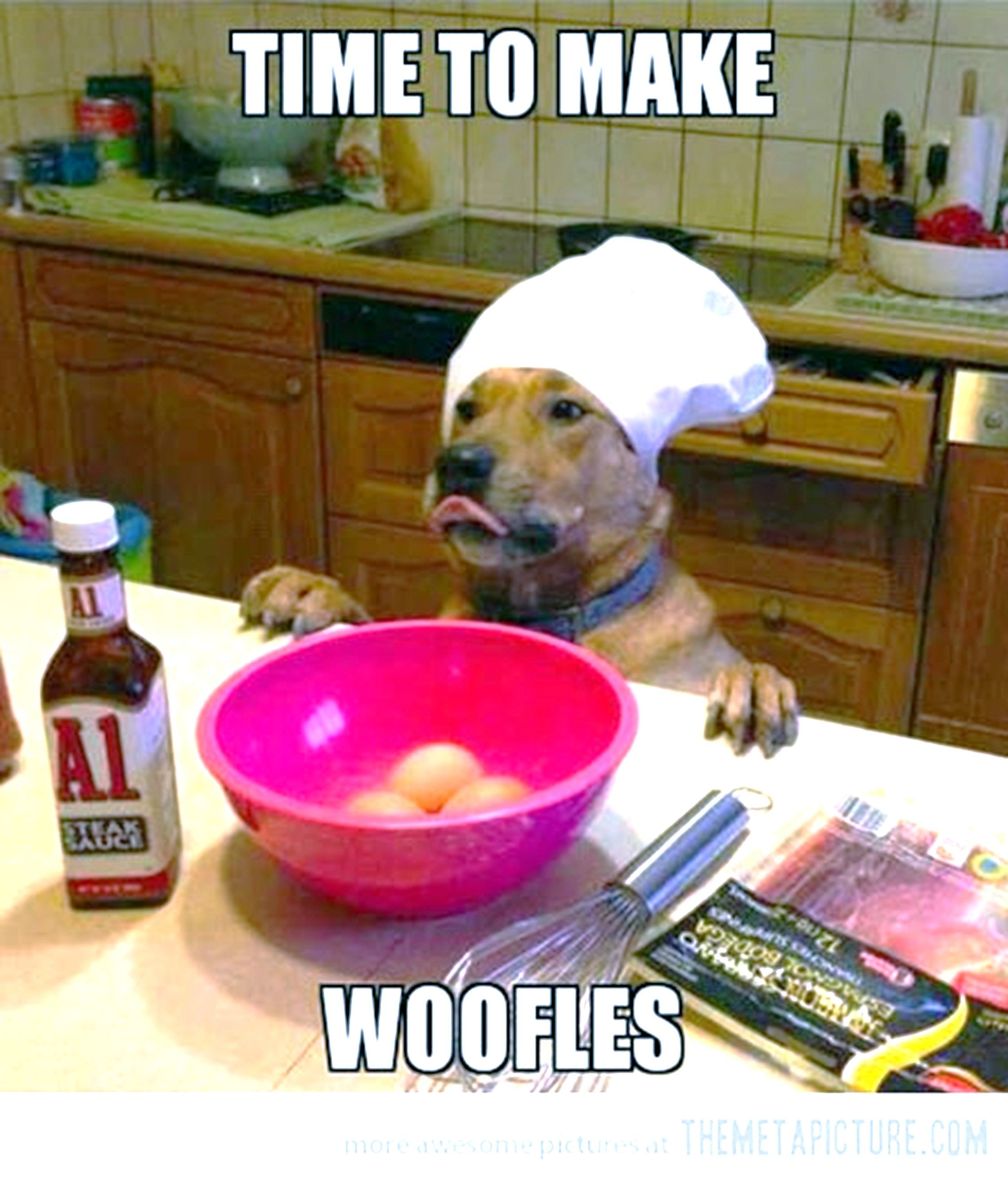 Time to make woofles Dog puns, Funny animal pictures