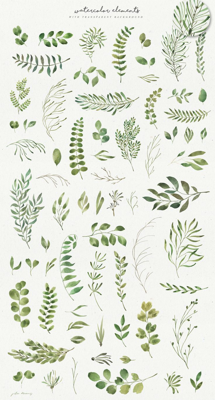 Herbs branches flourishes. Svg. DXF. PNG. EPS. | E