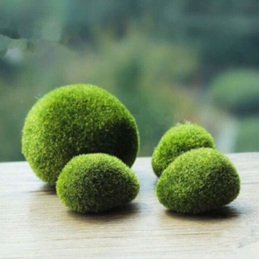 https://www.aliexpress.com/item/Marimo-Stone-Moss-Miniature-Home ...