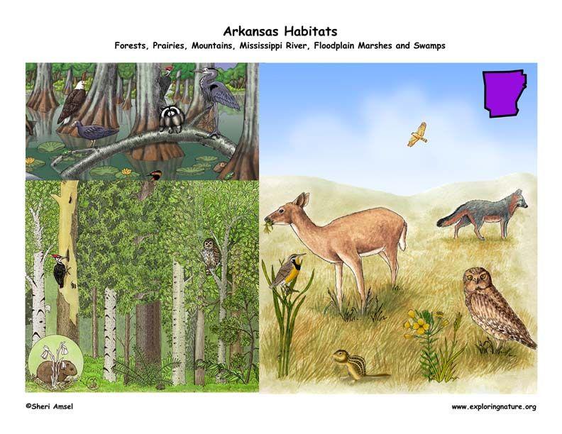 http://www.exploringnature.org/graphics/state_by_state/Arkansas_habitats72.jpg