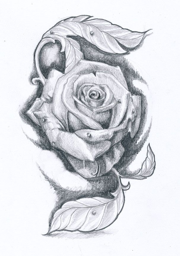 Rose Tattoo Design Ii By Klosmagda On Deviantart Rose Tattoo Design Realistic Rose Tattoo Rose Shoulder Tattoo