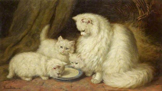 Persian mama with three kittens and a saucer of milk Cat