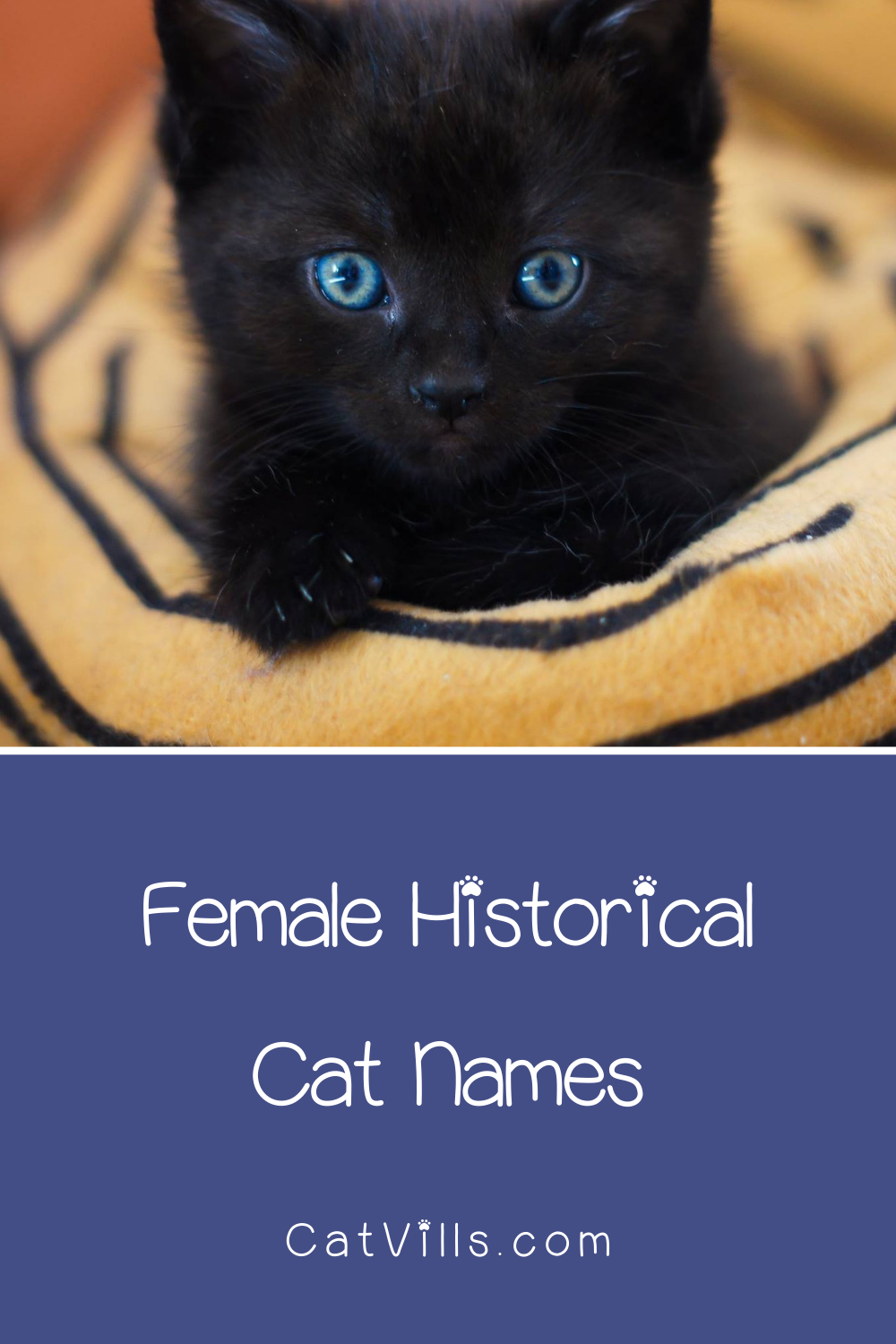 229 Brilliant Literary Names for Cats CatVills in 2020