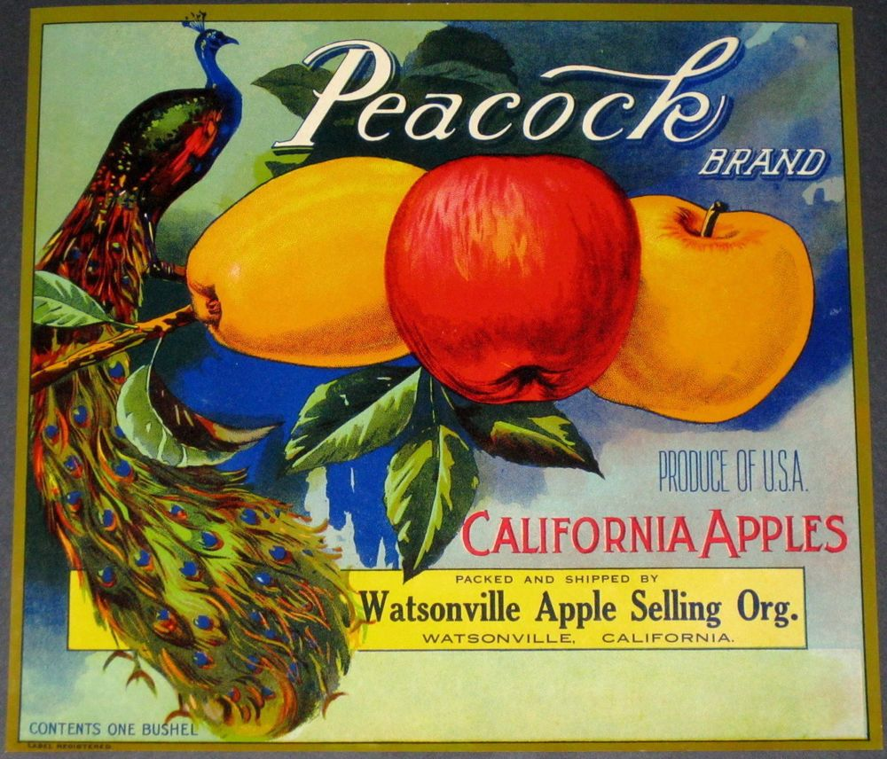 Watsonville California Peacock Bird Apple Fruit Crate Label Art Print