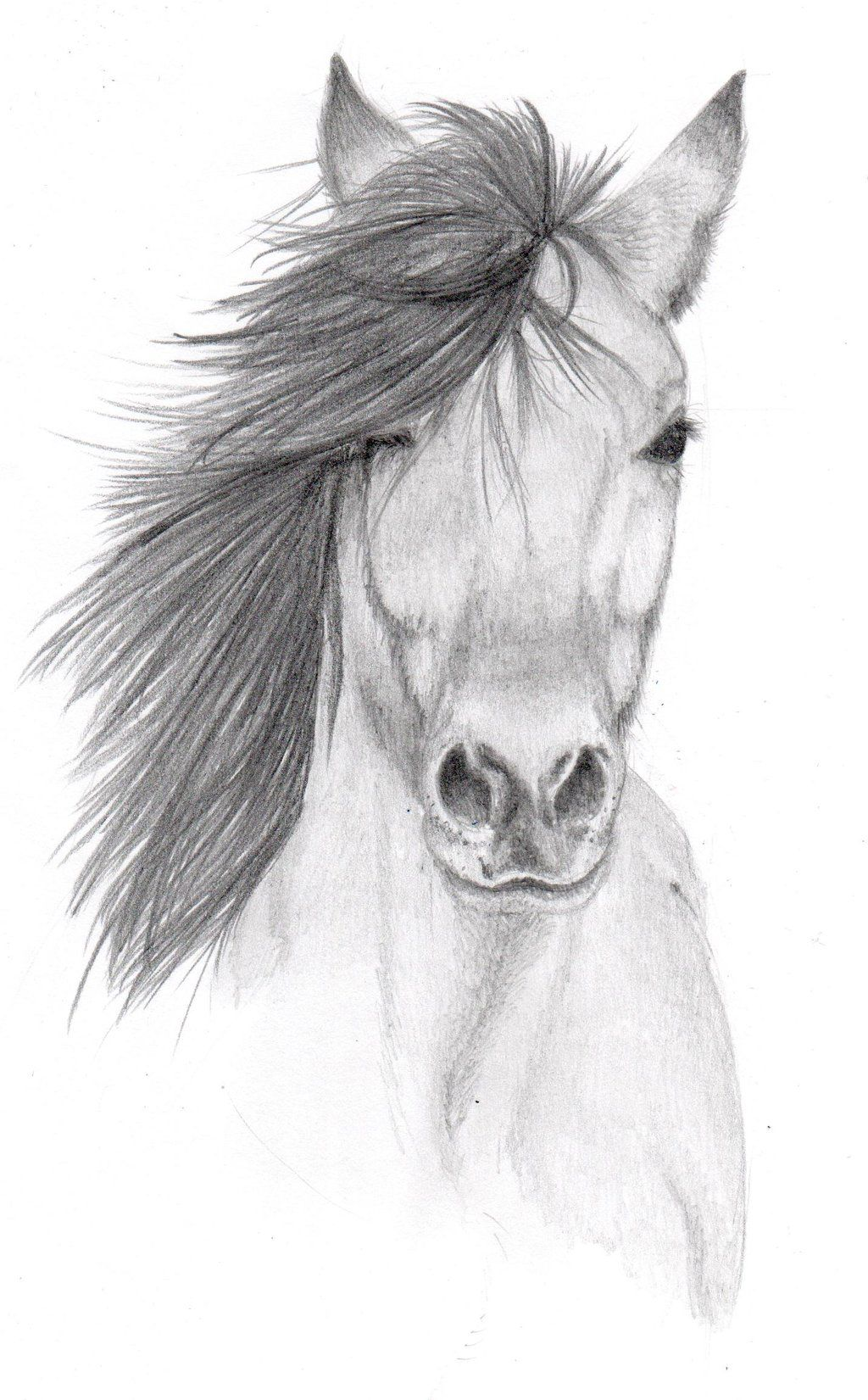 Horse Drawing Drawings Desenhos A Lápis Simples