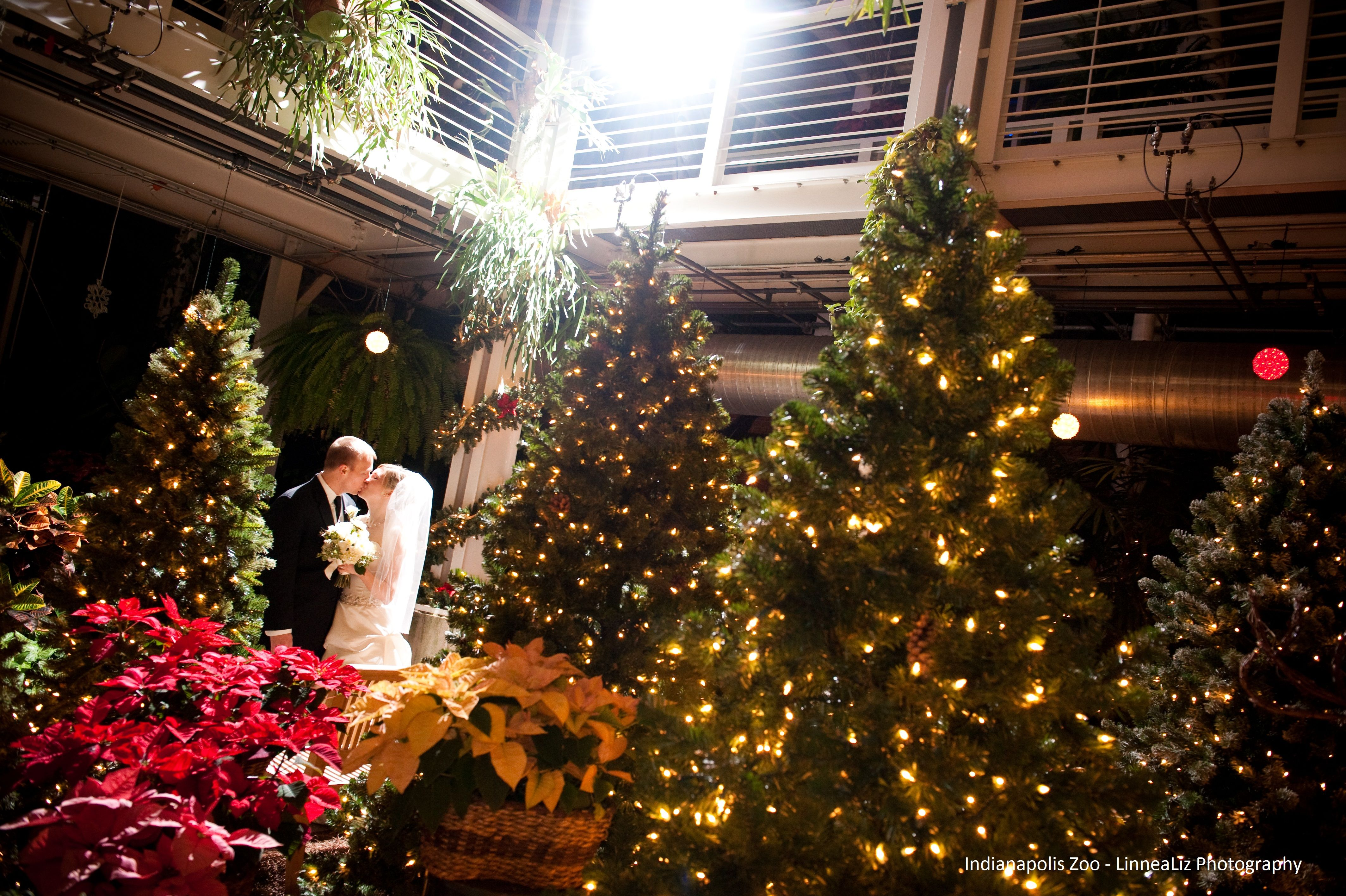 A Bride And Groom Sparkle Among The Glittery Christmas Lights In The Hilbert Conservatory At The Indianap Christmas Lights Indianapolis Zoo Perfect Destination