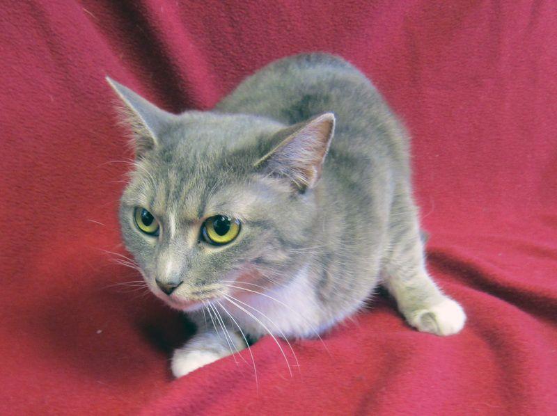 Adopt Nala On Petfinder Animals Animal Shelter Animal Rescue