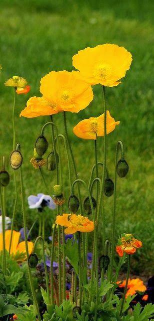 Yellow Mit Bildern Beste Blumen Schone Blumen Blumen Anbauen