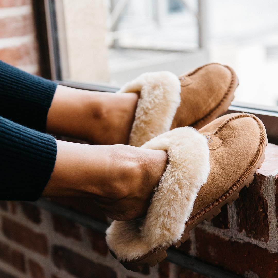 603eec45396 UGG SCUFFETTE II Ladies Mule Slippers Chestnut   Treat your feet to pure  luxury and comfort in these Scuffette II ladies slippers by UGG.