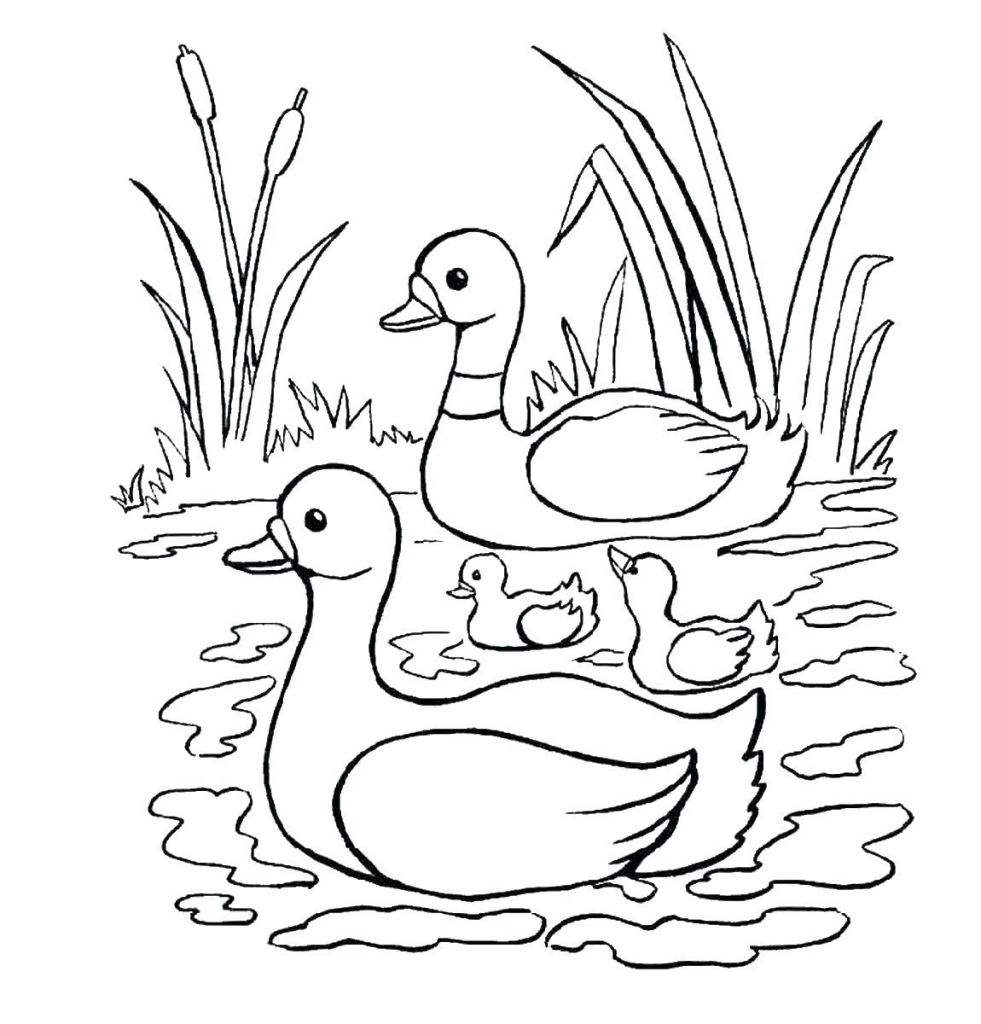 Letter D Coloring Page Animal Coloring Pages Coloring Pages