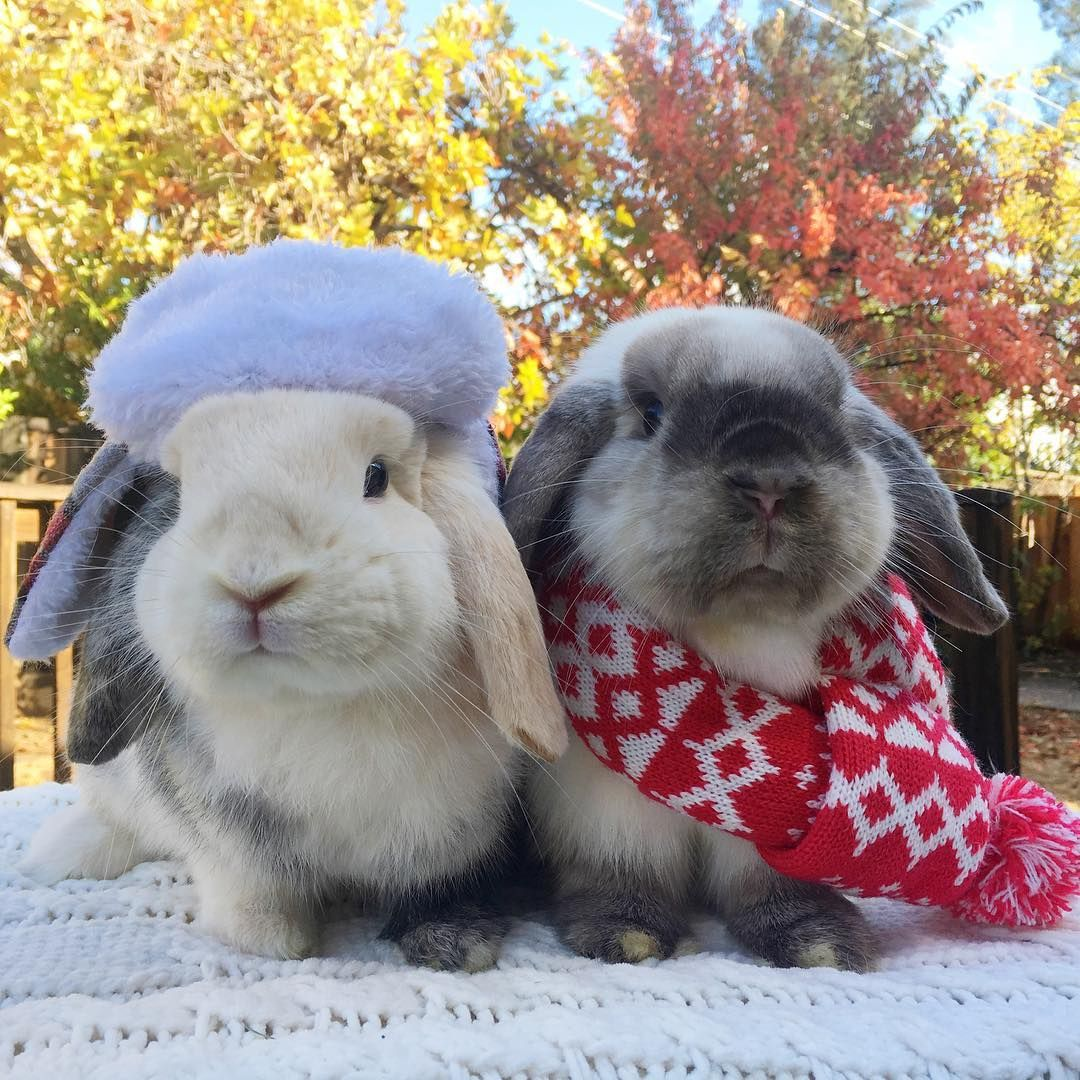 Instagram Cute Baby Bunnies Rabbit Pictures Baby Bunnies