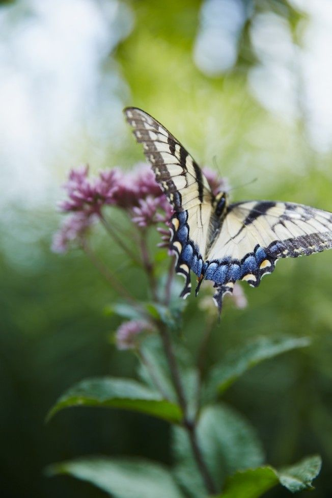 Discover Blackberry Farm Pinterest Butterfly Moth And Insects - Farm to table philosophy