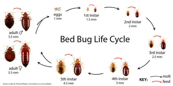 Check For Bed Bugs Before You Even Book Your Room Bed