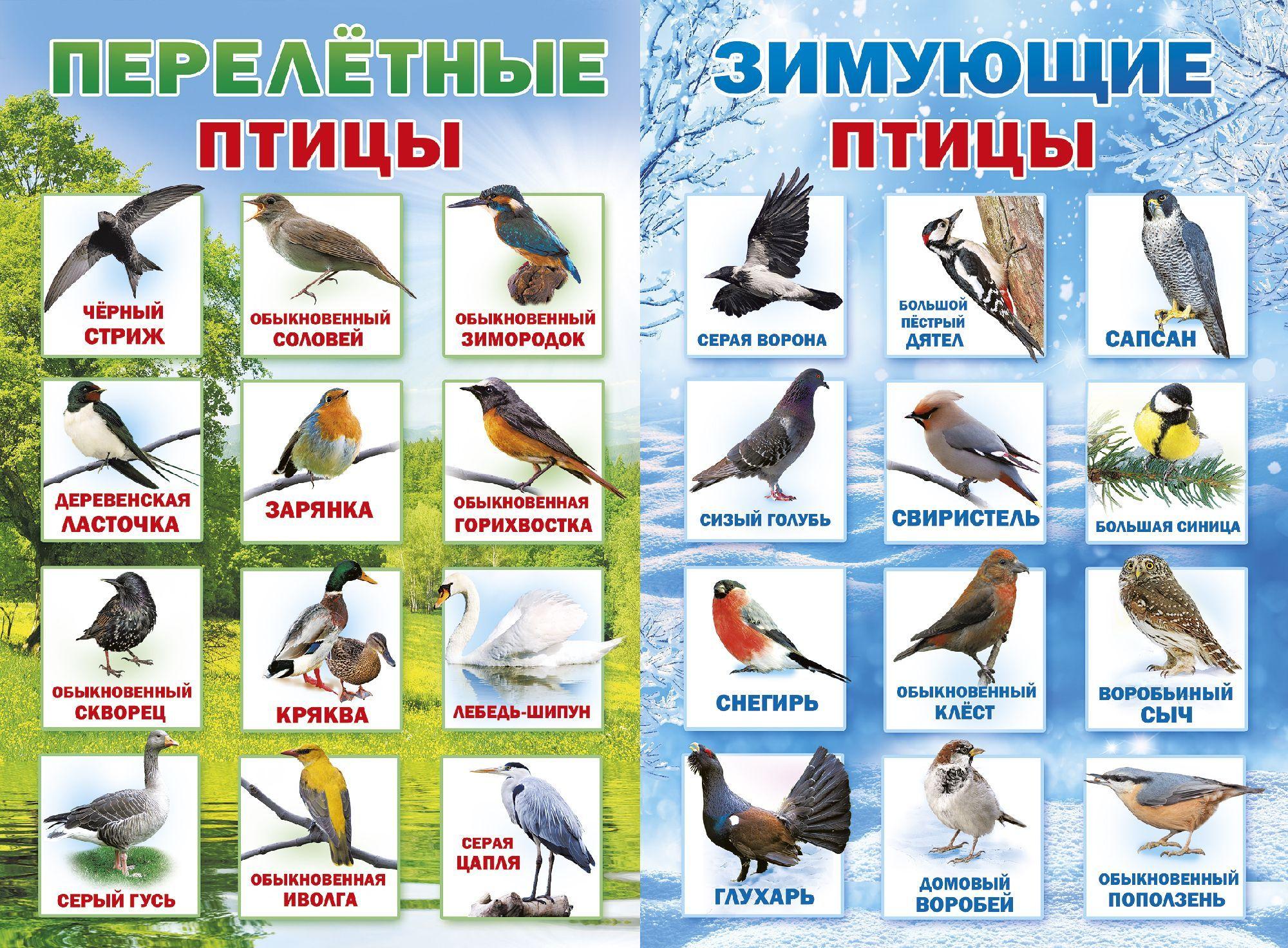 Картинка с зимующими птицами