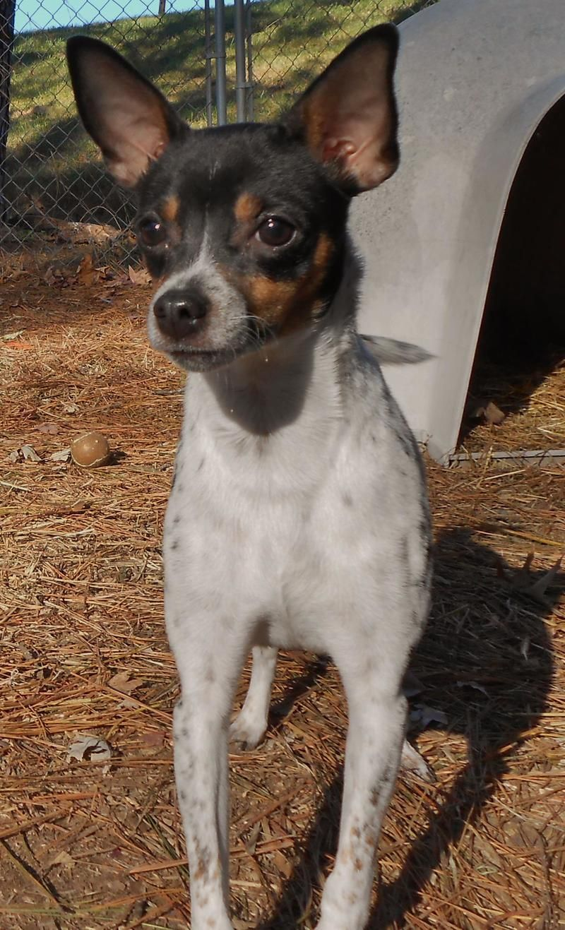 pets for sale in southern illinois craigslist