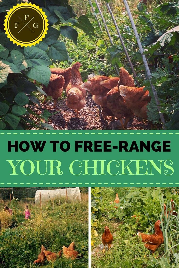 Free Ranging Chickens in the Backyard | Chicken garden ...
