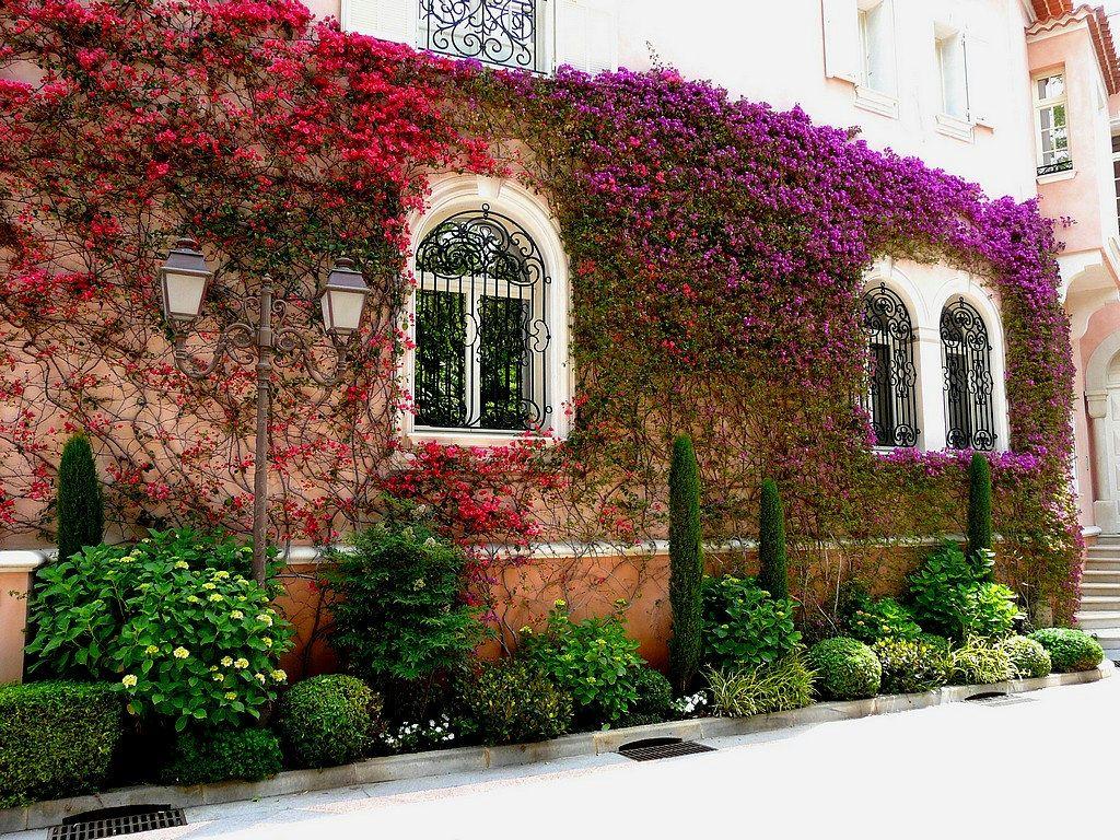 приютил фото французских двориков вывески сделан