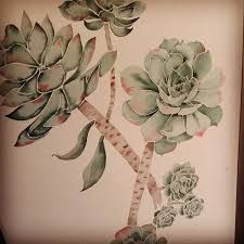 Image result for drawing succulents