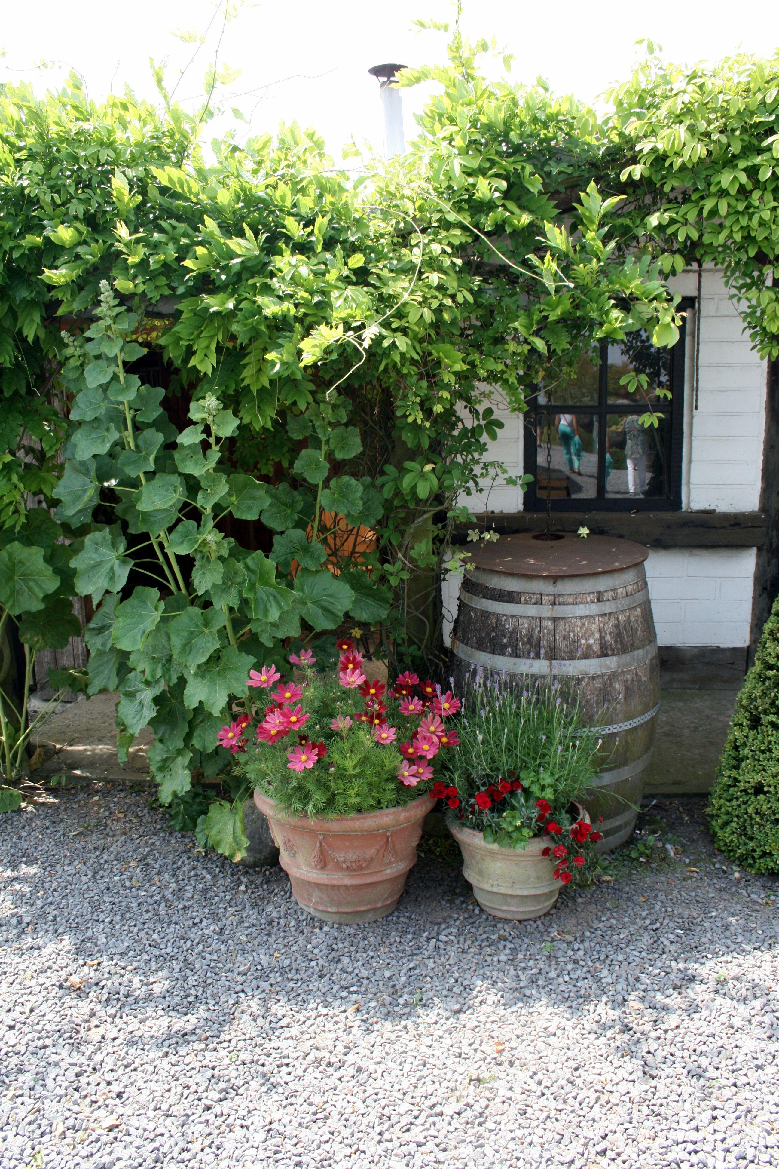 kleines topfgarten mit stil tolle images der bcdcddcccc