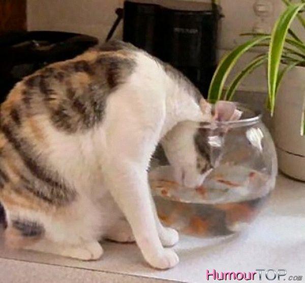 Photo marrante d 39 un chat curieux qui a gliss sa t te dans for Marre a poisson