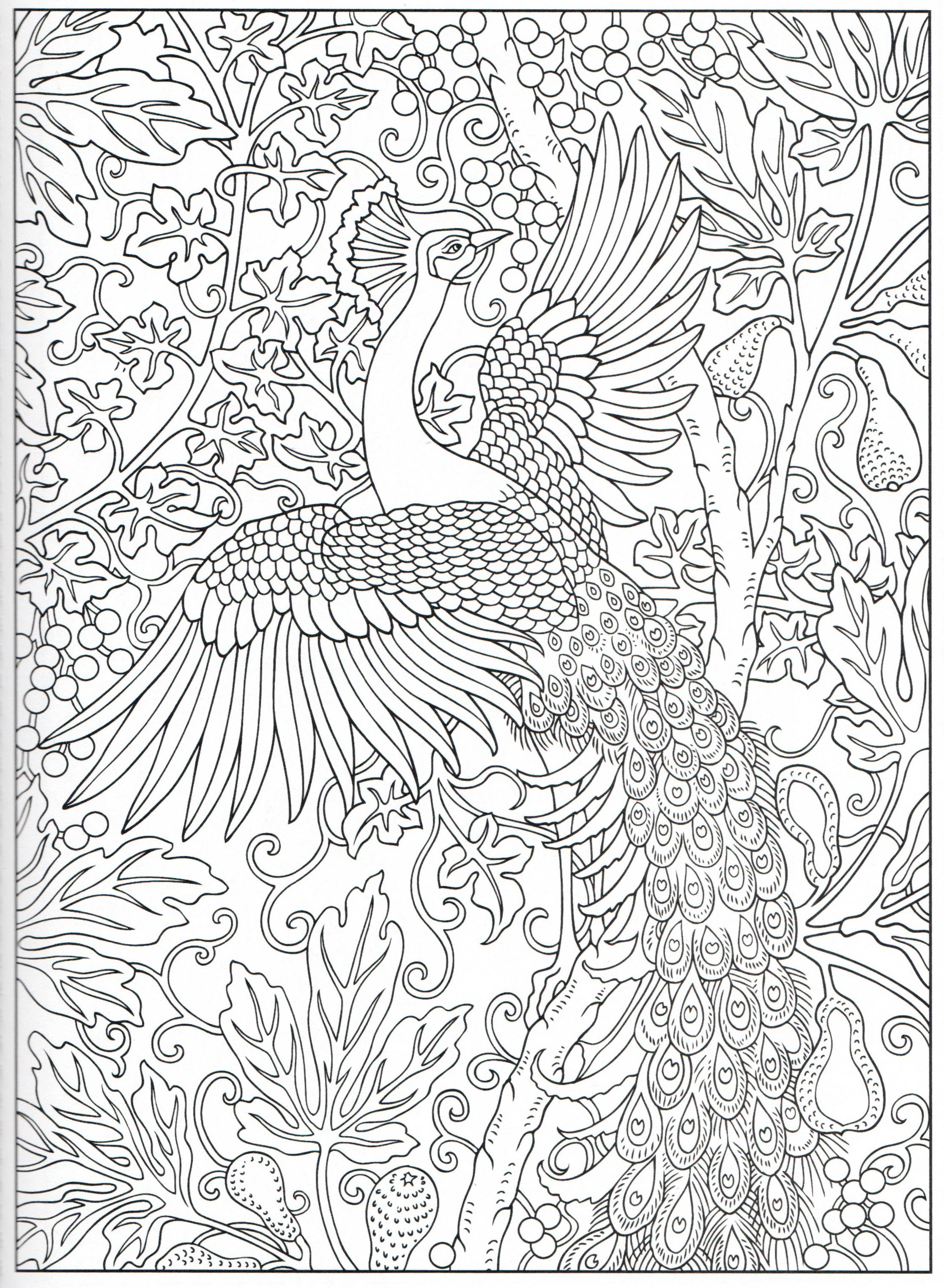 Peacock Coloring Page 15 31 Peacock Coloring Pages
