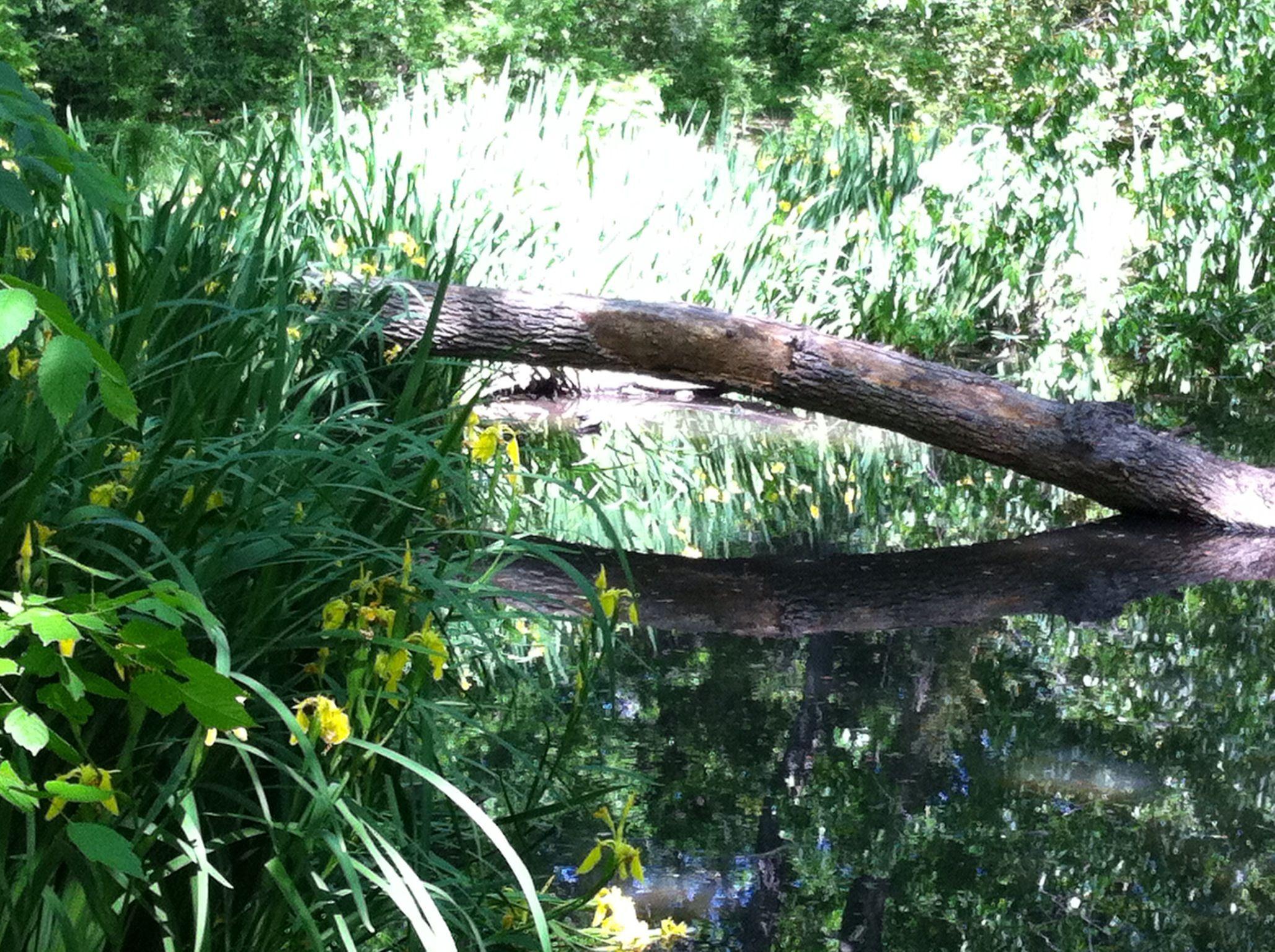 Down a path, Botanic Gardens