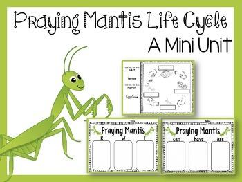 Praying Mantis Life Cycle Praying Mantis Life Cycle Life Cycles Praying Mantis